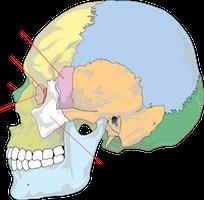 ④ 頭蓋骨・顎関節の矯正