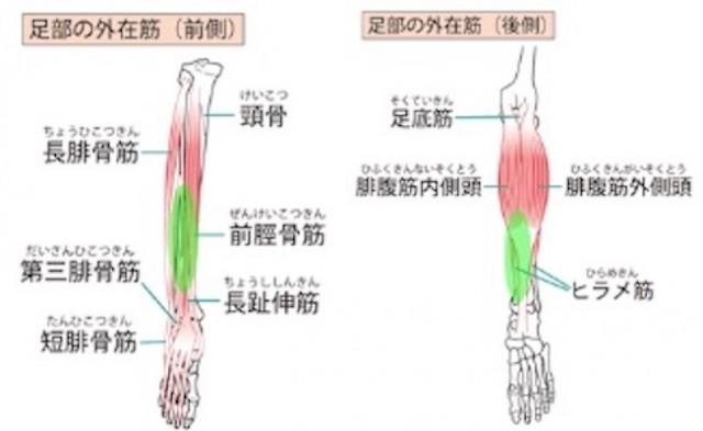 痛みの筋肉
